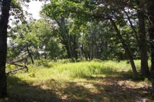 255 Acres of Prime Hunting Land in Central WI!