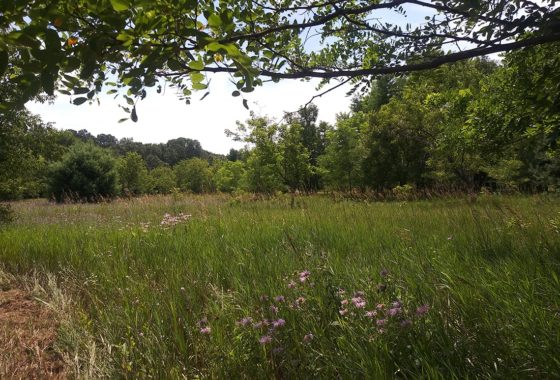 Waushara County 5 Acre Property Adjacent to State Land!