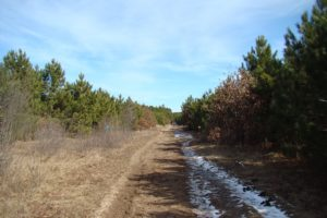 Central WI Cabin, Camping and Hunting Land Adjoins State Land!