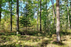 Langlade-Forest County Line Real Estate – 6 Acres only $35,900!