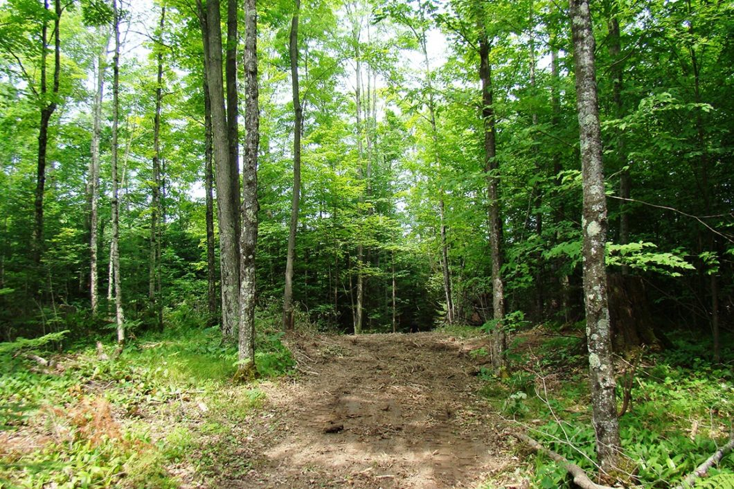 Langlade-Forest County Line Real Estate - 6.5 Acres only $33,900!