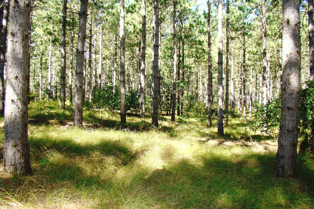 Central WI Cabin, Camping and Hunting Land for only $40,900!