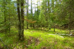 Adams and Juneau County Wooded Acreages near 14,000 and 23,000 Acre Lakes!