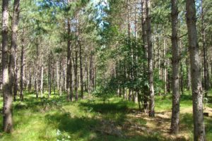 Hunting, Fishing, Trail Riding, Camping and Cabin Property near Public Land!