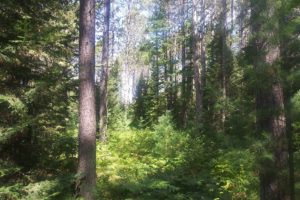 Hunting, Fishing, Trail Riding, Camping, and Cabin Property Adjoins the National Forest!