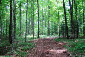 Pickerel Lake Area Land for Sale - Walk to the Lake!