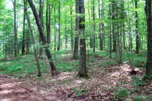 Northern WI Pickerel Lake area Wooded Camp or Cabin Site!