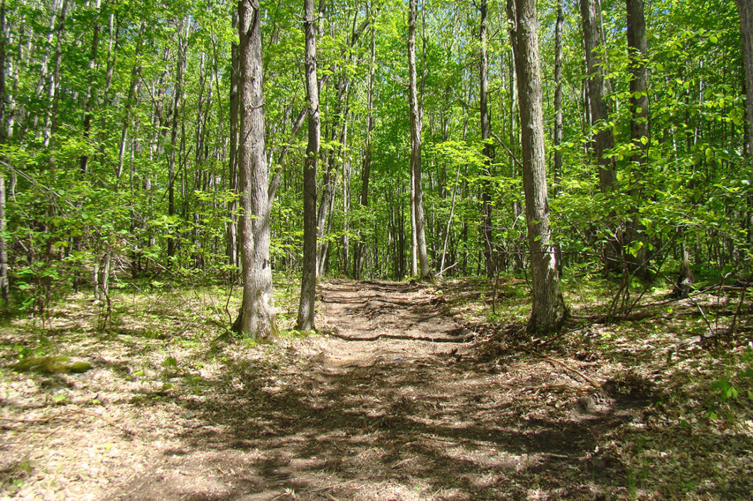 crivitz-wi-area-land-for-sale-adjoins-county-forest