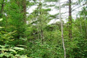 Northern WI, 3 Acres, Woods, Walk to the Lake!