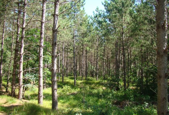 5 Acre Northwest WI Wooded Land for Sale!