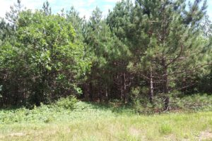 4 Acre St. Croix Falls Area Wooded Land for Sale