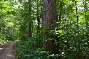 4 Acre Minocqua Area Wooded Land For Sale!