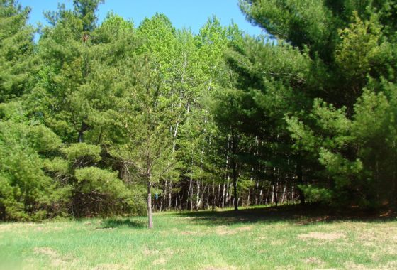 Big Sand Lake Real Estate – 5 Acres!