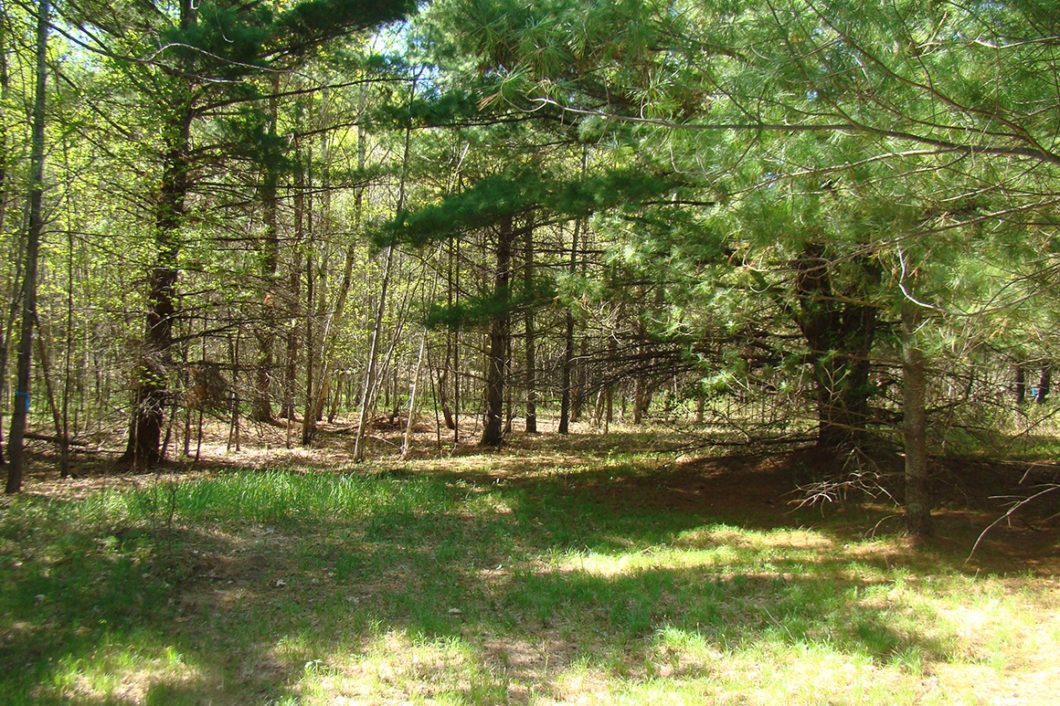 6.2 Acres with Huge Trees and Meadow near Webster, WI!