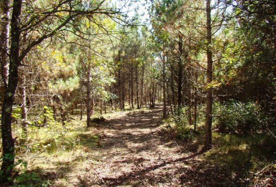 Burnett County Wooded Hunting Land & Getaway Property!