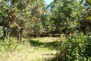 Burnett County Wooded Hunting Land & Getaway Property!