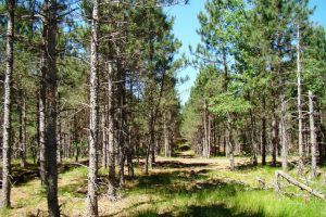 Central WI Property for Sale