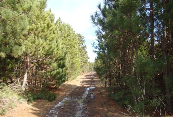 10 Acres Adjoins State Land in Adams County!