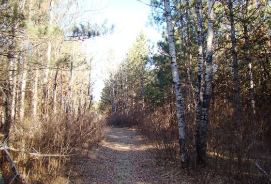 6.6 Acre Adams County, WI Land for Sale