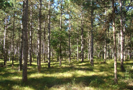 adams-county-wi-land-for-sale