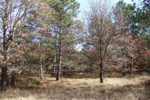 Adams County 7 Acre Property for Sale!