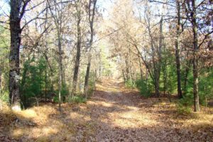 Juneau County 7.5 Acre Property for Sale!