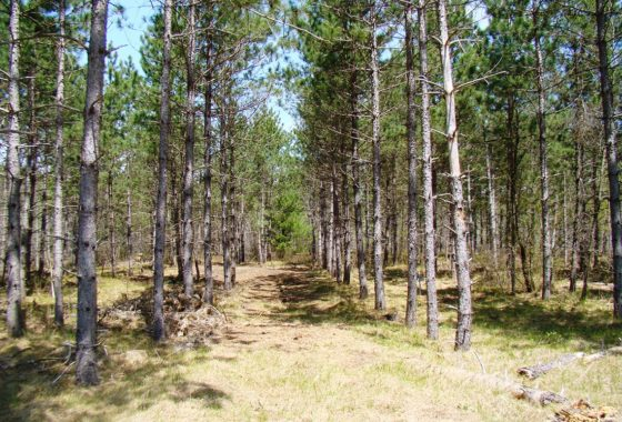 Juneau County 9.5 Acre Property for Sale!