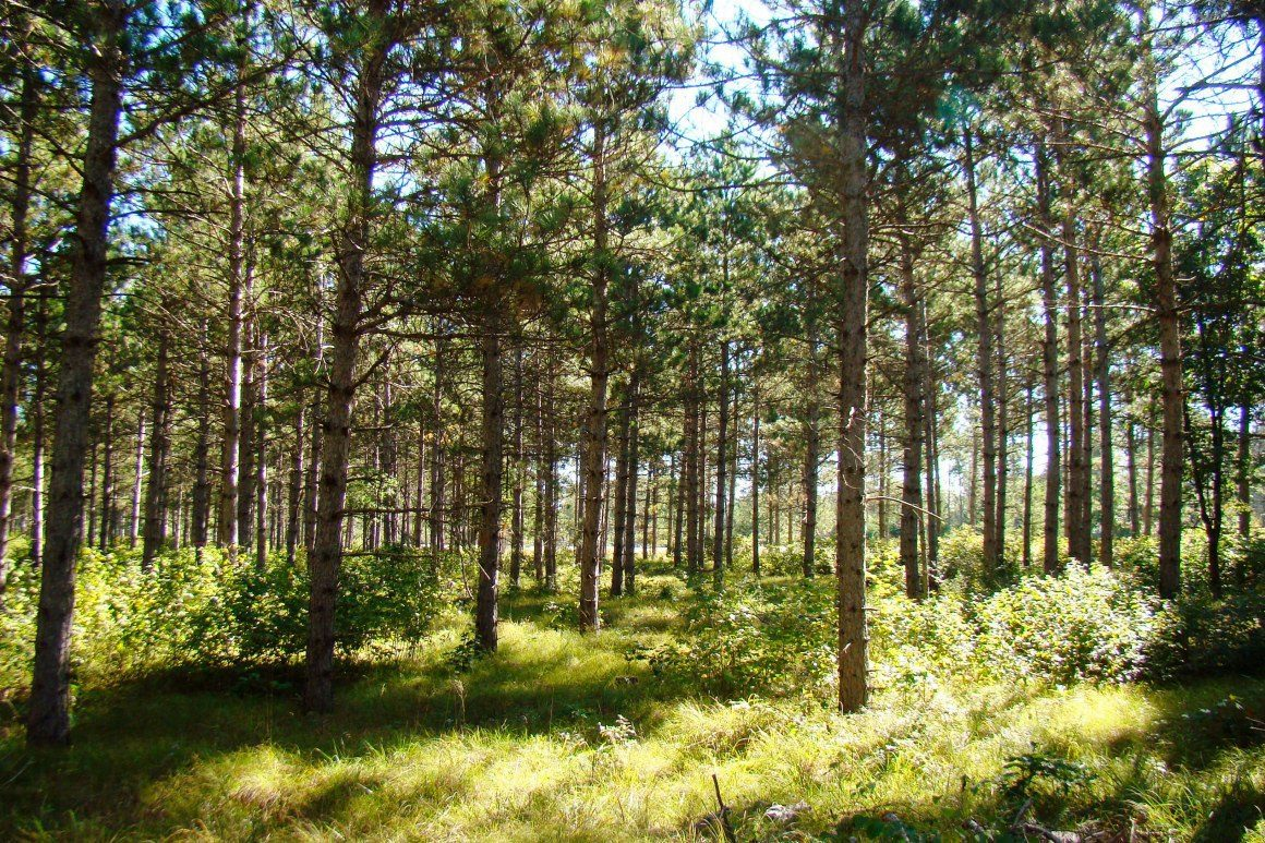 3 Acre Central WI Land for Sale!