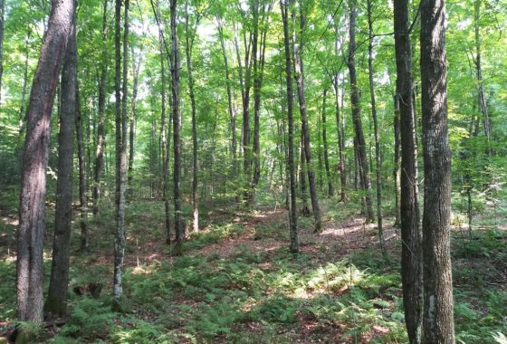 3 Acres Perfect for Camping & Building near Lake Lucerne!