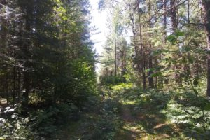 10 Acres Adjoins the Nicolet National Forest!