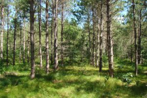 7 Acres Surrounded by Polk County Forest