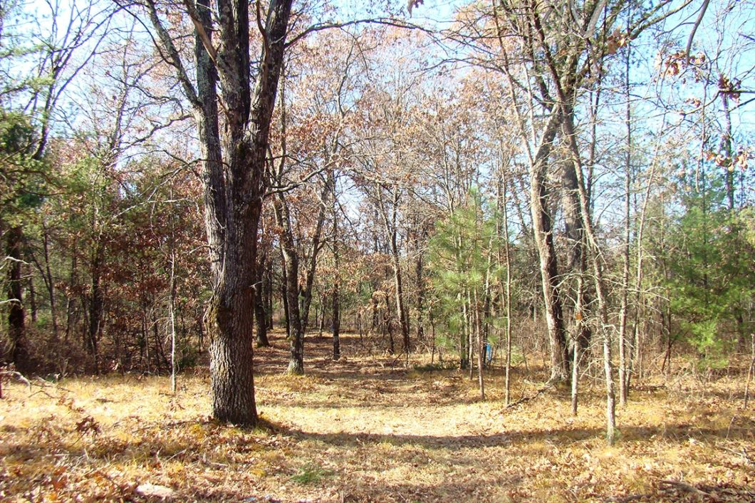 Castle Rock Lake Area Wooded Land for Sale!