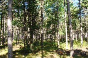 Lake Petenwell Area Wooded Land for Sale!