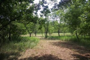 Redgranite, WI wooded land for sale!