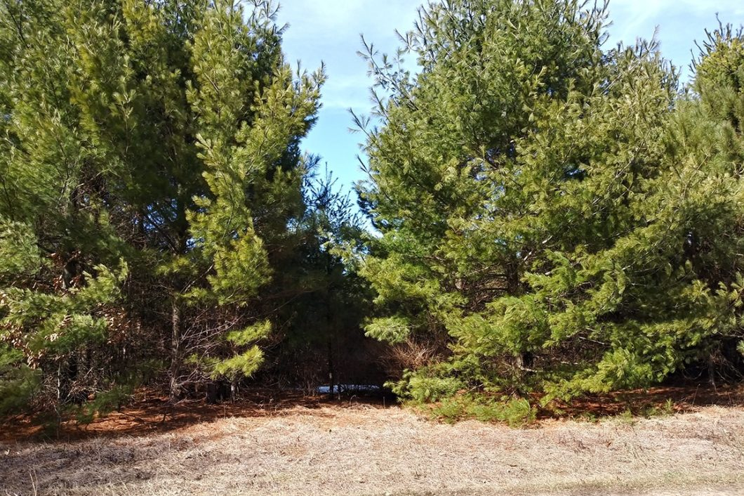 Rome, WI Land for Sale at only $38,900!