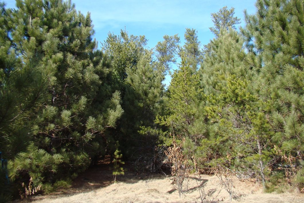 5+ Acre Adams County Wooded Land for Sale!