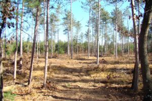 3 Acre Juneau County Wooded Land for Sale!