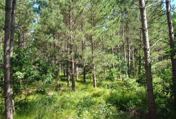 5 Acre Juneau County Wooded Land for Sale!