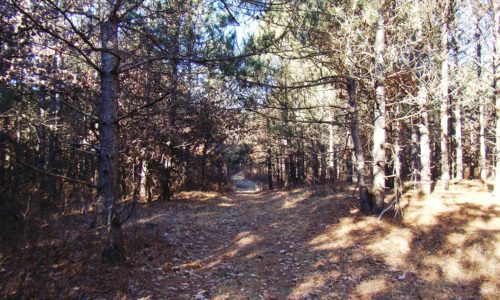 Rome, WI Land for Sale at only $29,900!