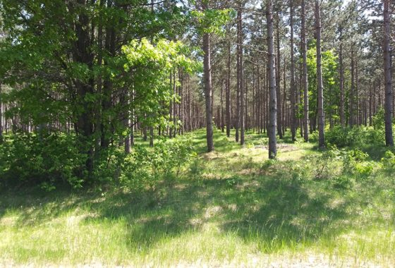 Rome, WI Land for Sale at only $36,900!