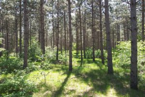Adams County, WI Land for Sale at only $39,900!