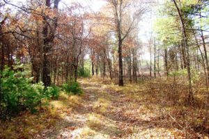 Central WI Wooded Land for Sale - 8 Acres!