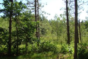 Central WI Wooded Land for Sale - 10 Acres!