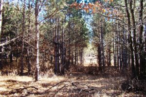 Central WI Wooded Land for Sale - 7 Acres!