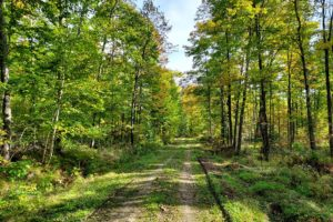 Northern WI, Lily Lake 6.6 Acre Property with Driveway & Clearing!