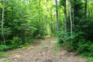 Bring Your Camper Once You Own! 3.5 Acres, Pickerel Lake, WI with Driveway and Clearing!