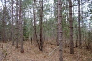 Tomahawk Real Estate for Sale - 10.3 Acres only $47,900!