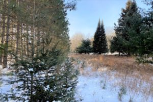 Marinette County Land for Sale - 2 acres for only $19,900!