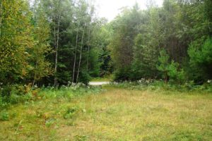 Bring Your Camper Once You Own! 3 Acres, Tomahawk WI, with Driveway and Clearing!