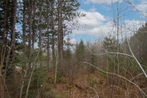 10 Acres for Sale near Tomahawk, WI!